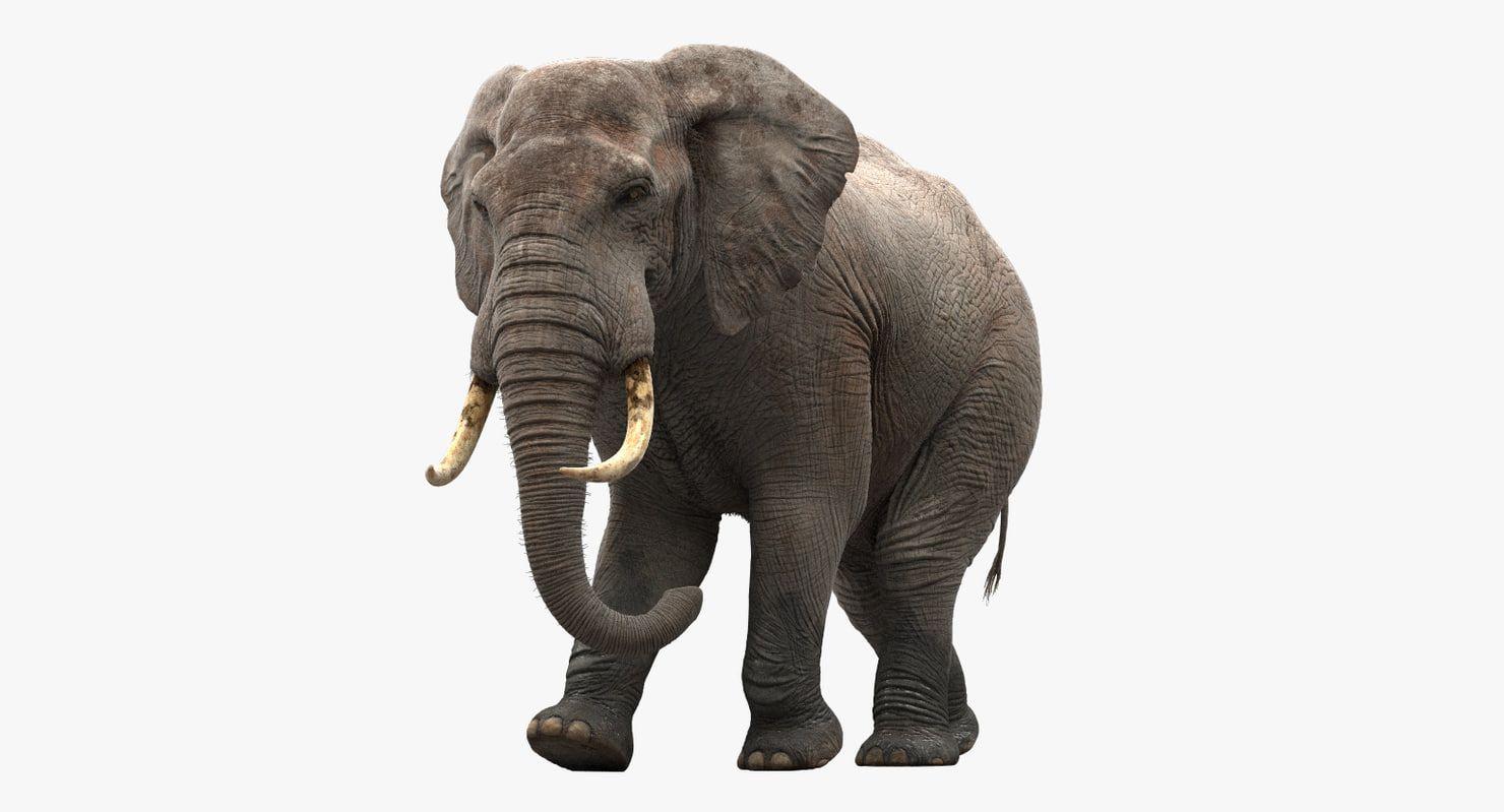 3d Model Elephant Rigging Animation 3d Elephant 3d Rigging Animation Of An Elephant 3d Heavy Animal 3d African Elephant 3dele 3d Model Elephant Animation