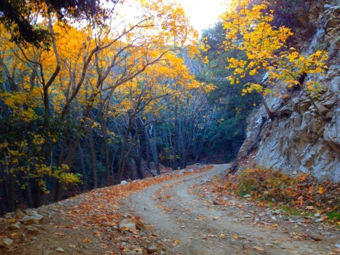 10 Country Roads In Southern California That Are Pure Bliss In The Fall Southern California Hikes Country Roads California Hikes