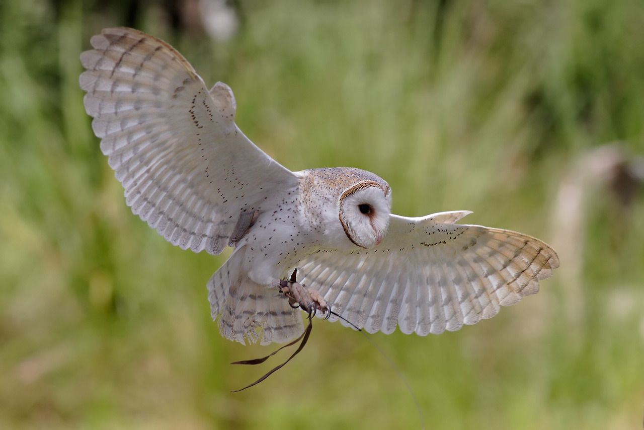 Owly - The Geek