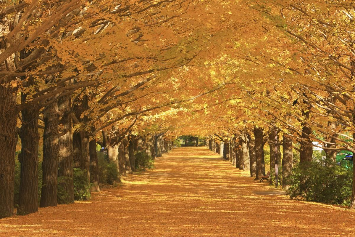 昭和記念公園 Showa Kinen Koen