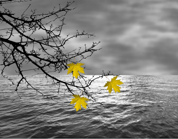 Black white yellow leaves on tree branch over by littlepiephotoart 18 99