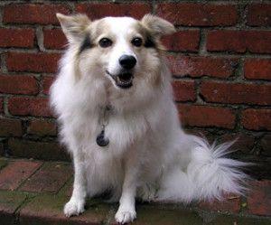 Dog Ear Infection Warning On Ear Mites In Dogs Ear Mites In Dogs And WARNING On Dog Ear Medicine - http://www.seozenbonus.net/dog-ear-infection-warning-on-ear-mites-in-dogs-ear-mites-in-dogs-and-warning-on-dog-ear-medicine/