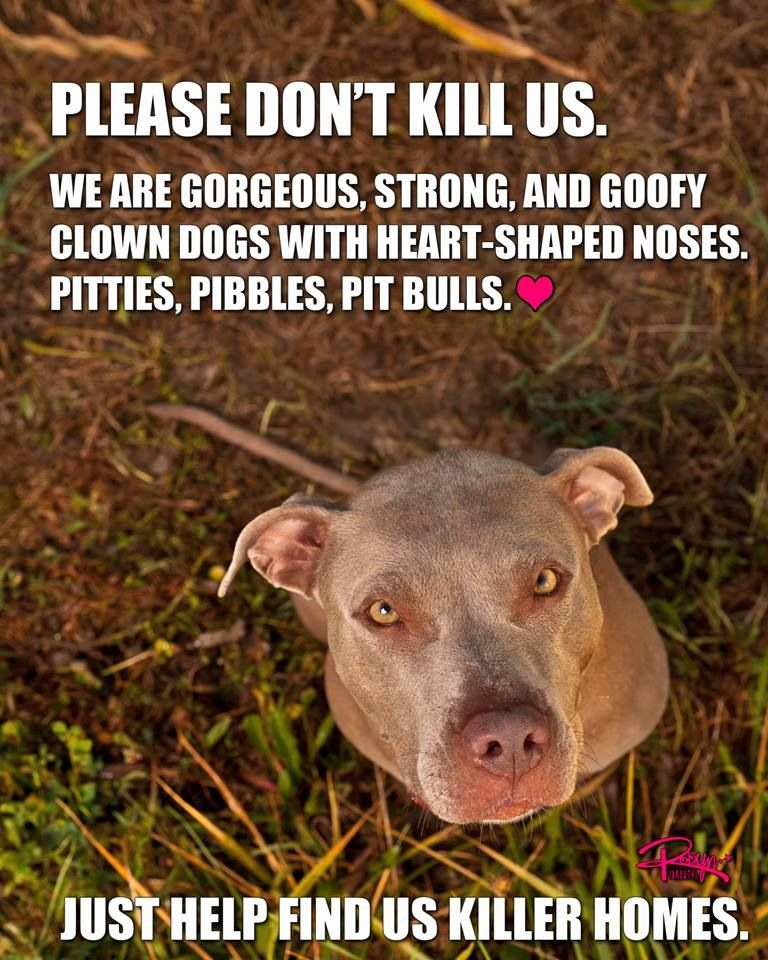 You Re Amazing Dog: And The Best Cuddle Bugs Around! Help A Pit Bull And Adopt