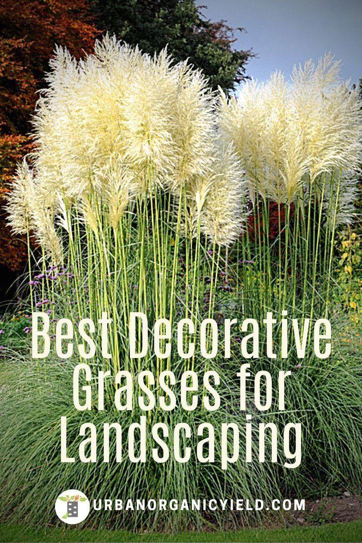 #DecorativeGrasses #CurbAppeal #Landscaping #Gardening #UrbanOrganicYield  | 1000