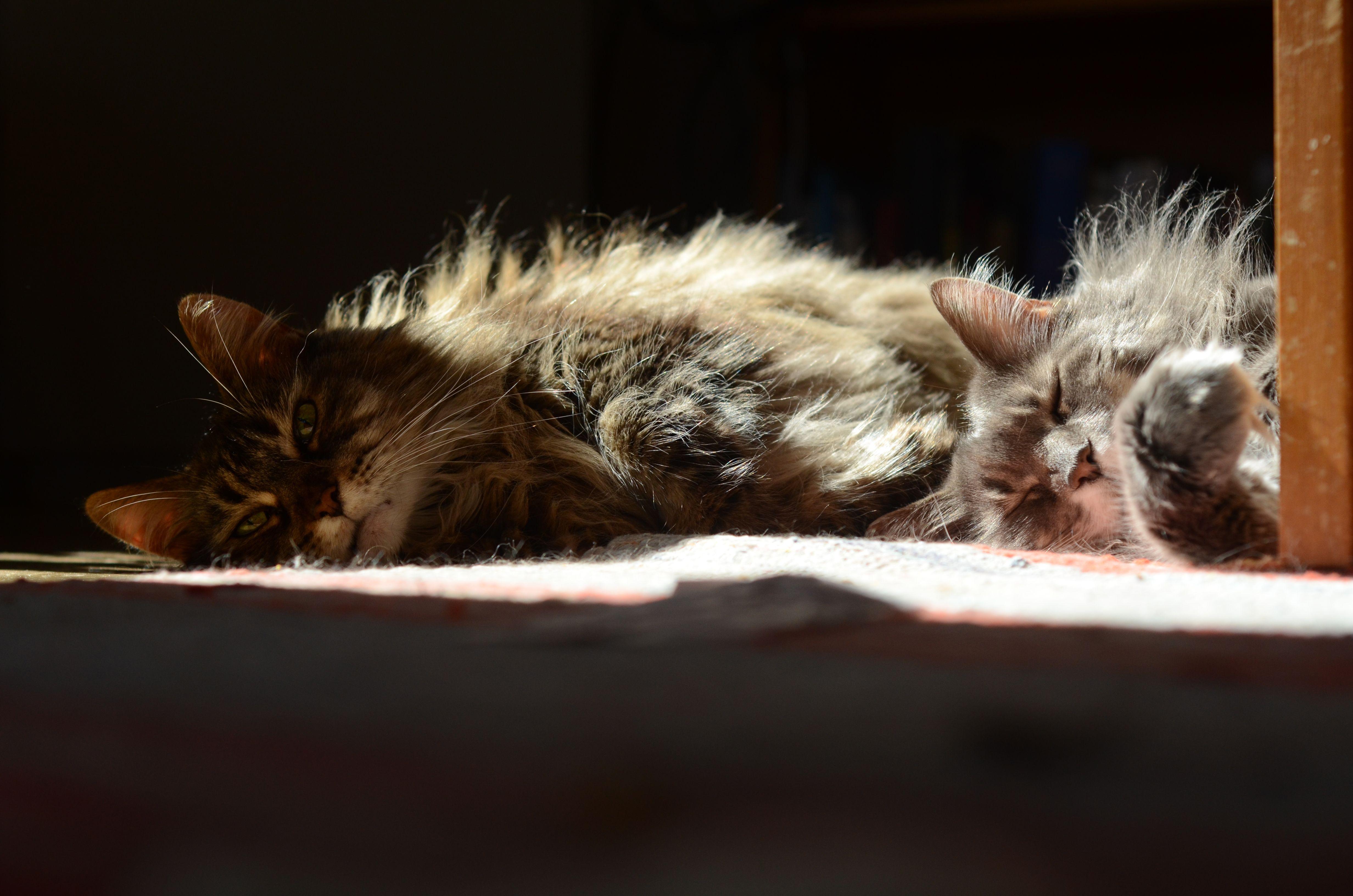 My Cats Cats Animals