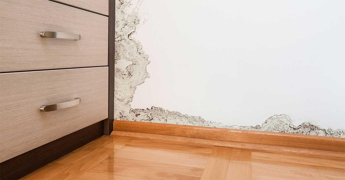 Heavyduty mold remover renovation diy molding how to