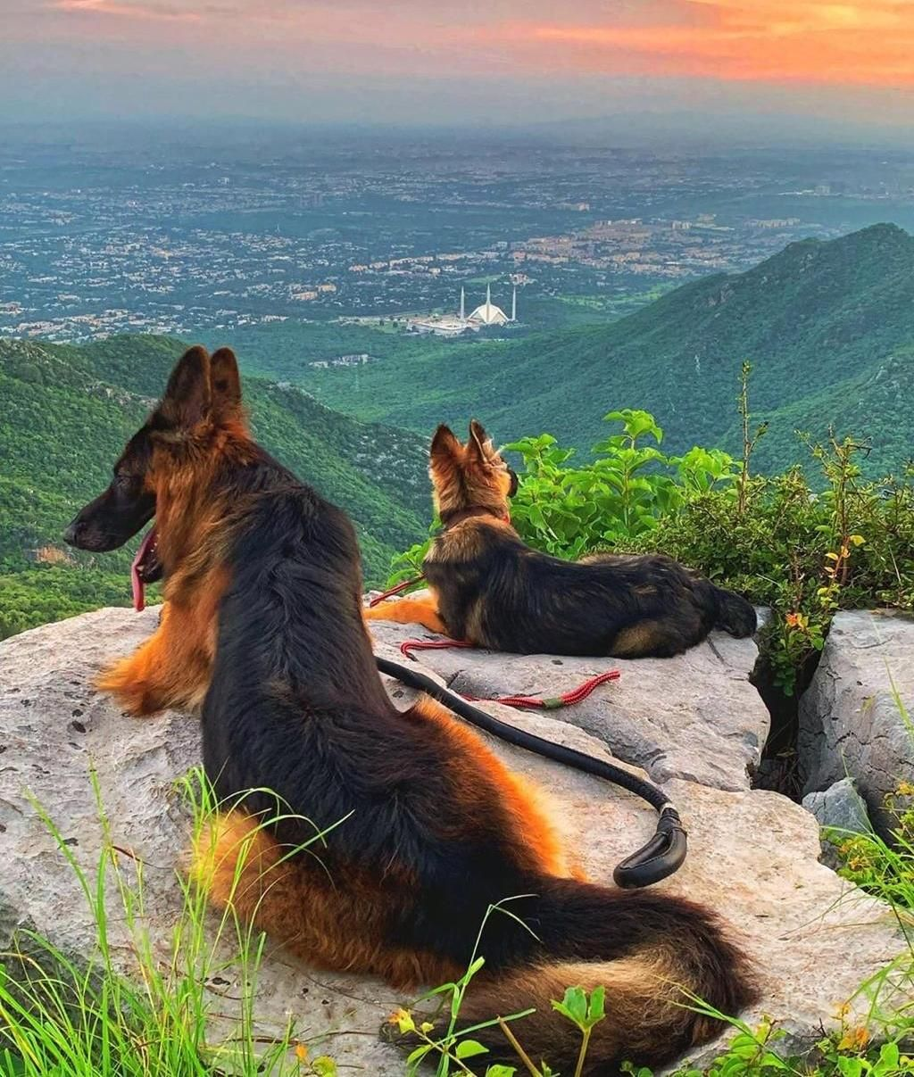 With My Dogs On Hiking Trail 5 Islamabad Pakistan Hiking Camping Outdoors Nature Travel Backpacking Adventure M Dogs Day Out Dog Adventure Hiking Dogs