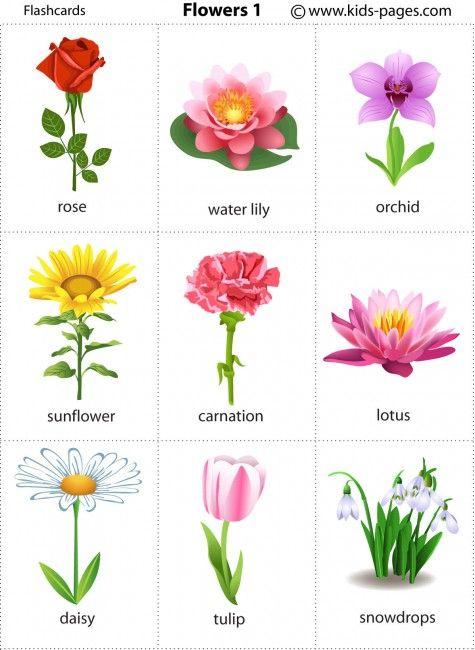 Flower Flashcards Flower Names Flashcards For Kids Kids English