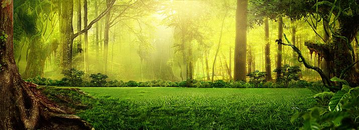 Poster Banner Background Photos Vectors And Psd Files For Free Download Pngtree Fantasy Forest Nature Images Landscape Background