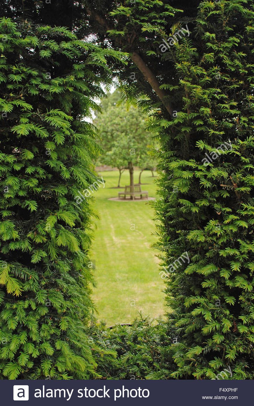 Download this stock image: Window in trimmed hedge topiary wall at ...