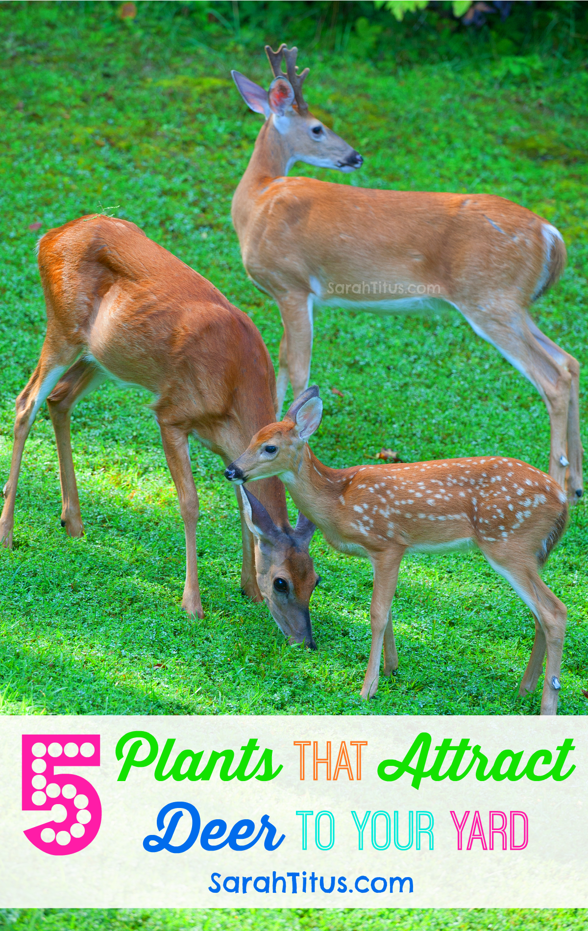 most gardeners spend a lot of time trying to figure out how to keep deer out of their gardens but there are some of