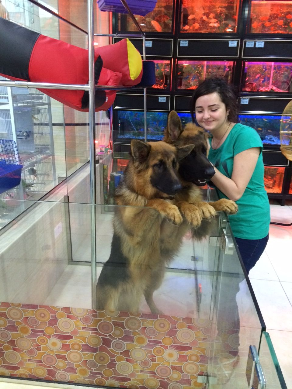 Sara With Two Big German Shepherd Puppies 055 1552020 Or 055
