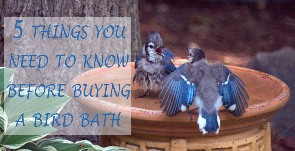 You might want to read this before buying a bird bath! via ...