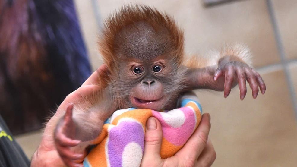 Wie Geht S Rieke Bei Den Inselaffen Affen Affenbaby Und Affen Baby
