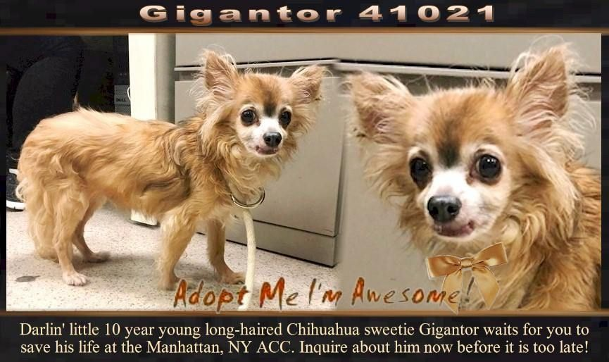 This Darling Little Moppet Waits For You To Save His Life At The Manhattan Ny Acc Nyc Dogs Dog Photography Small Dog Breeds