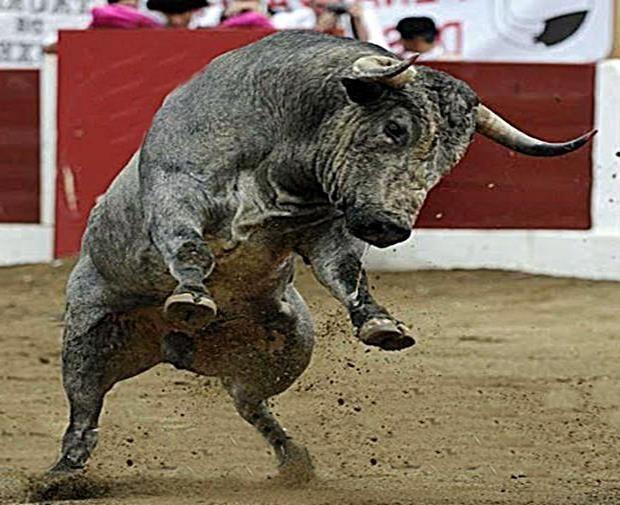 Toro!! - Very sad...