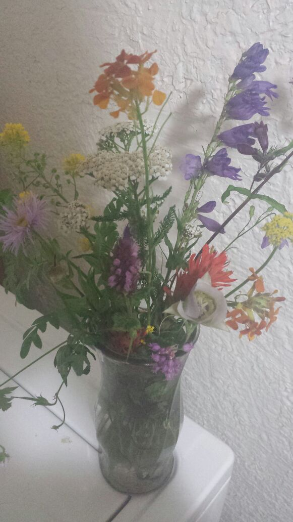 Picked these in the Sandia Mountains on 8/1/15