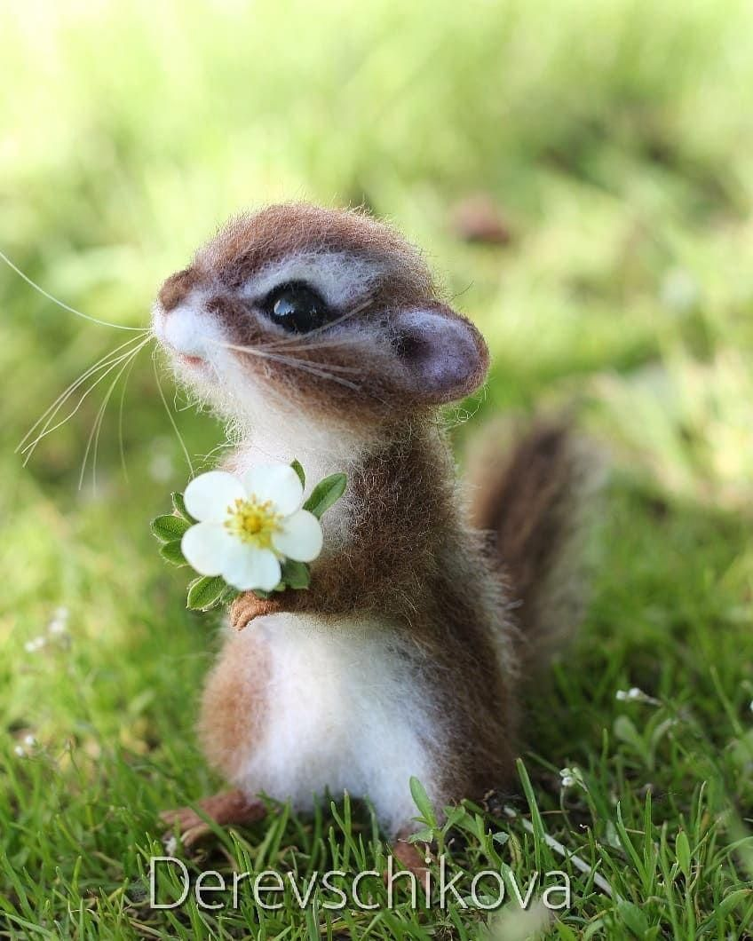 Pin By Tekpe Dan On Animais Mais Fofos Animals Beautiful Cute Little Animals Baby Animals Funny