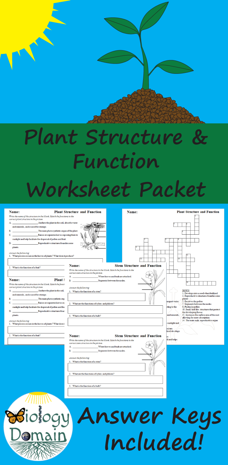 hight resolution of Plant Structure and Function Worksheets   Plant structure