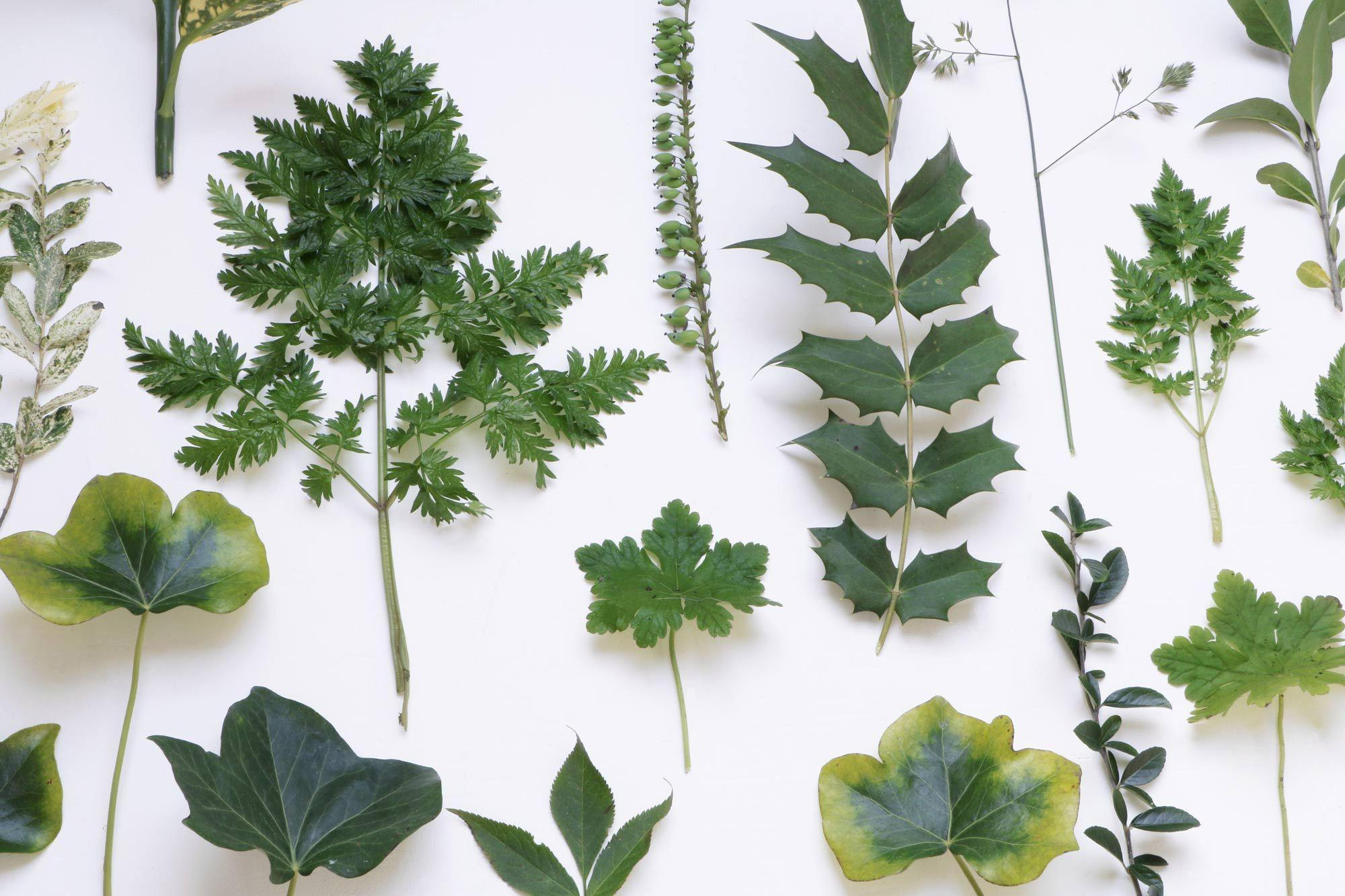 botanische wanddecoratie fotografie amp styling marij