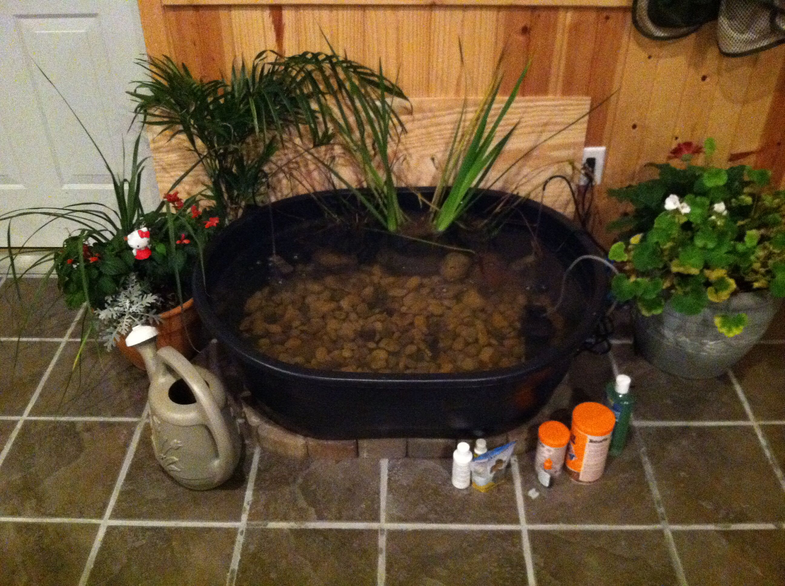 Indoor fish pond i brought my outdoor fish pond to the for Outdoor fish pond filter
