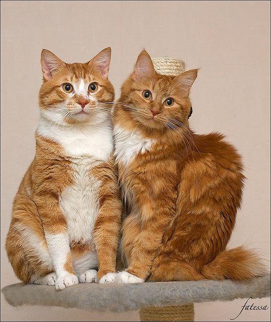 Img 0803 Version 2 Kittens Cutest Cats Kittens Cute Cats