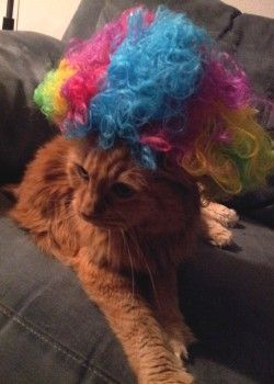 Miss Tabitha Cat Models The Afro Circus Rainbow Wig Included With Dreamworks Madagascar 3 Blu Ray Dvd Combo Pack M Silly Animals Cat Model Rainbow Wig