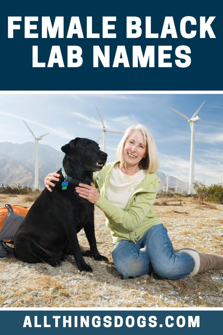 Female Black Lab Names Black Lab Names Female Dog Names Black Lab