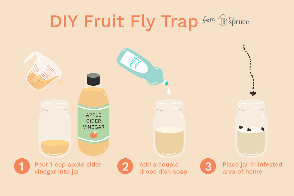 How to Make Your Own Fruit Fly Trap Fruit fly trap diy