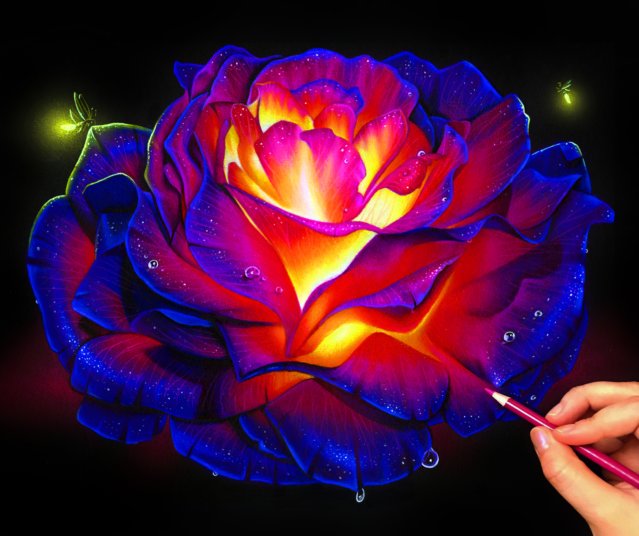 Glowing rose colored pencil drawing! Black paper drawing