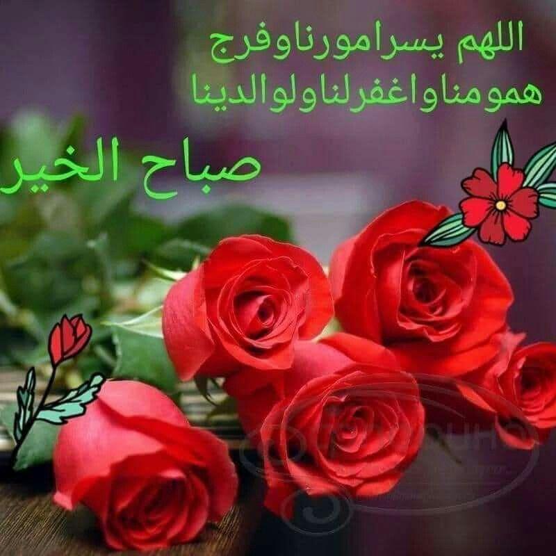 Pin By Hanan Allam On Hanan In 2021 Flowers Plants Rose