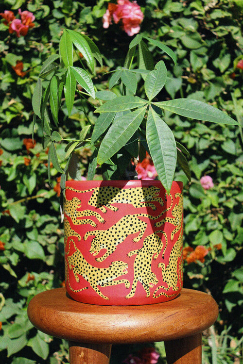 Jaguar Planter — Animal Theory is part of Hand painted planter, Painted plant pots, Plant pot covers, Planters, Plant decor, Hand painted - Spice up your plant life with this vibrant ode to the Mayan's favorite big cat  the JAGUAR  Based on my own handpainted planters, this vinylwrapped terra cotta planter offers the same painterly feel at a more accessible price point and production schedule   NOTE Even though there is a drainage h
