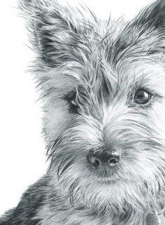 Nolon Stacey A Pencil Artist S Blog Cairn Terrier Dog Art