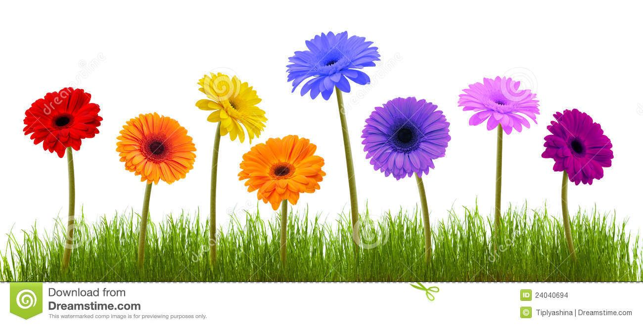 Spring Flowers White Background Flowers Pinterest Flowers And