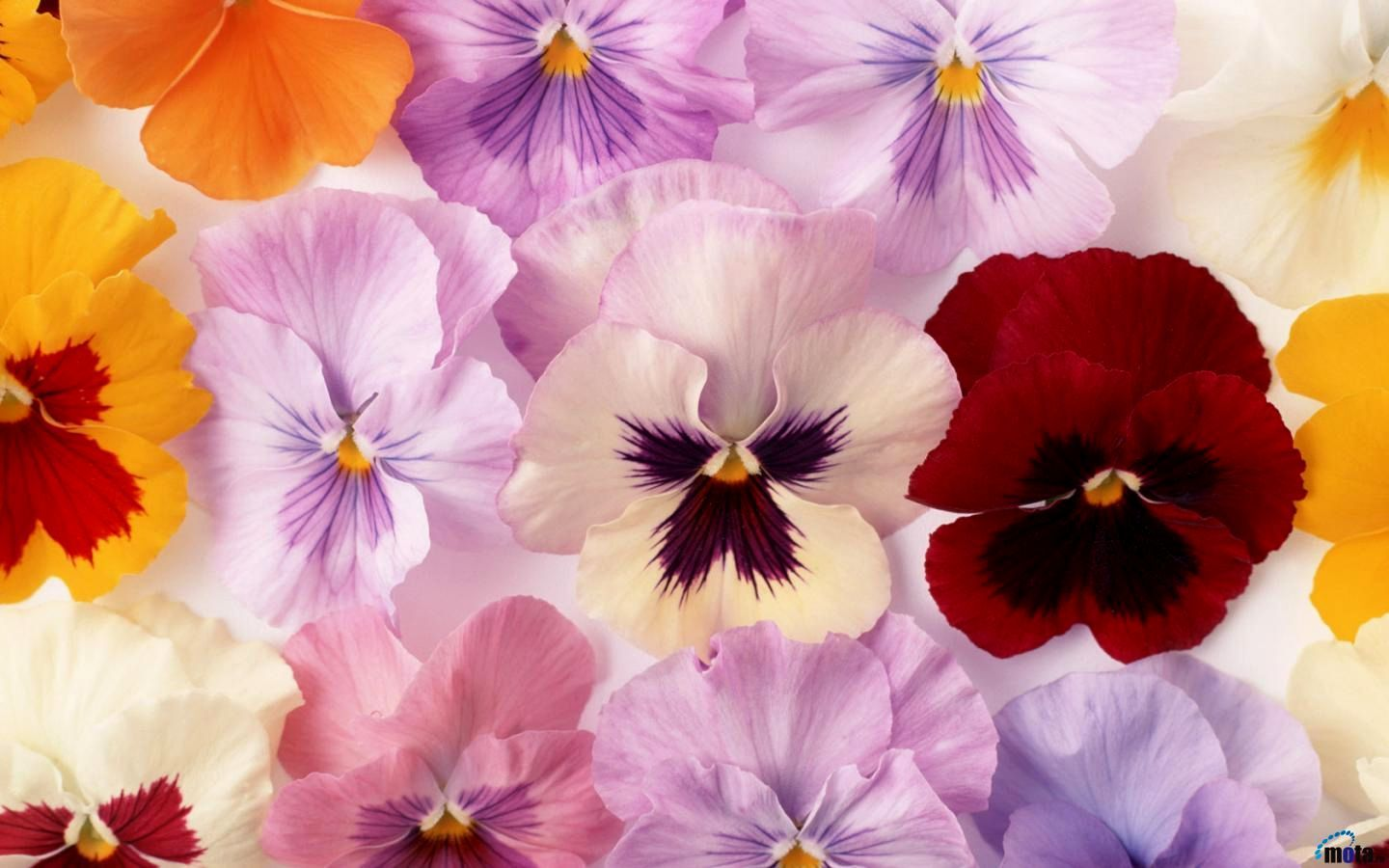 Beautiful fresh flowers pictures visit link for more image beautiful fresh flowers pictures visit link for more image izmirmasajfo