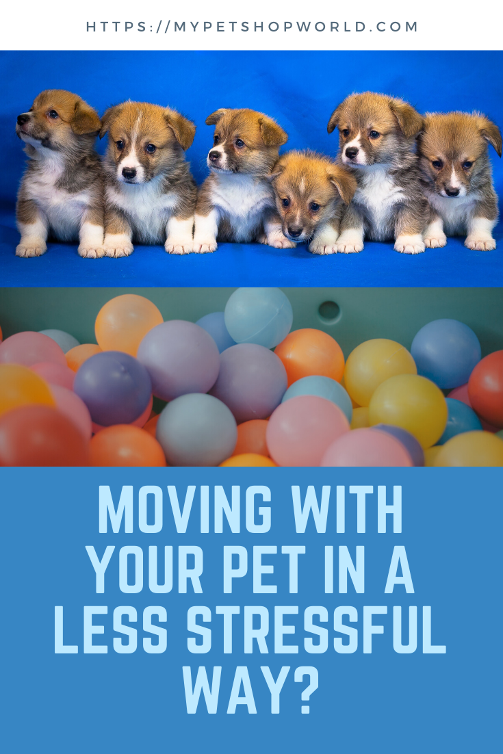 When You Move Home It Is Stressful For You And Your Pet Pets Dogs Cats Love Loveforcats Doglovers Lovefordogs Puppies Your Pet Pets Pet Boarding