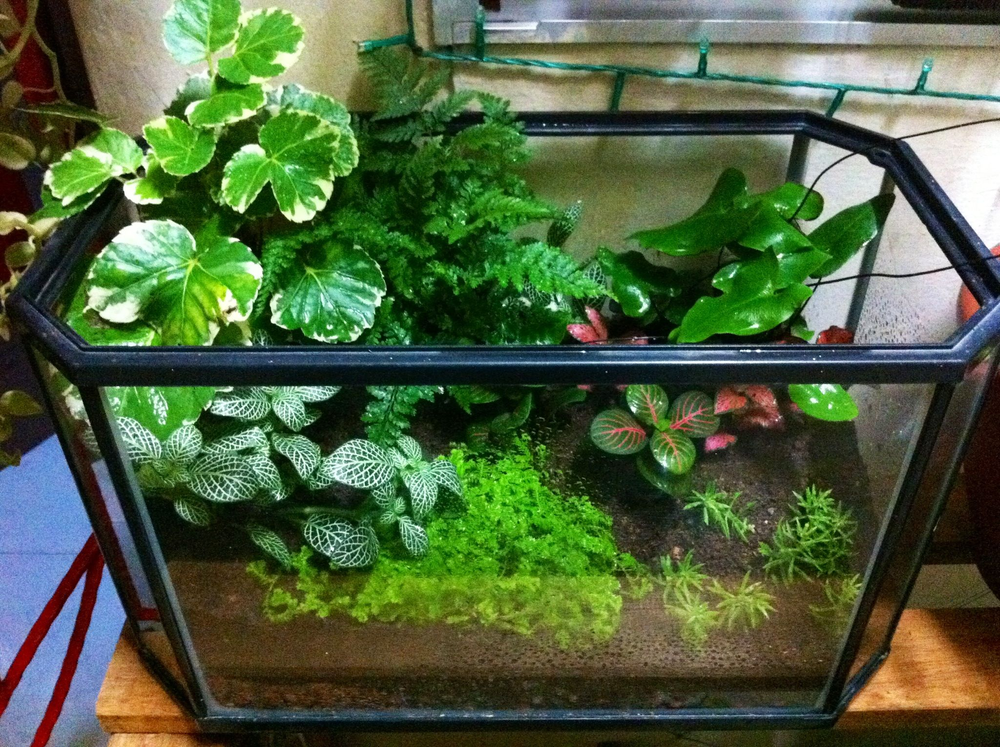 my first terrariums used my old aquarium and placed some