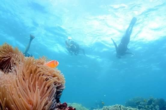 #greatbarrierreef #scubadiving #diving #nemo #cairns #pacific #beautifulday #adventure #australia by marj_on_the_road http://ift.tt/1UokkV2
