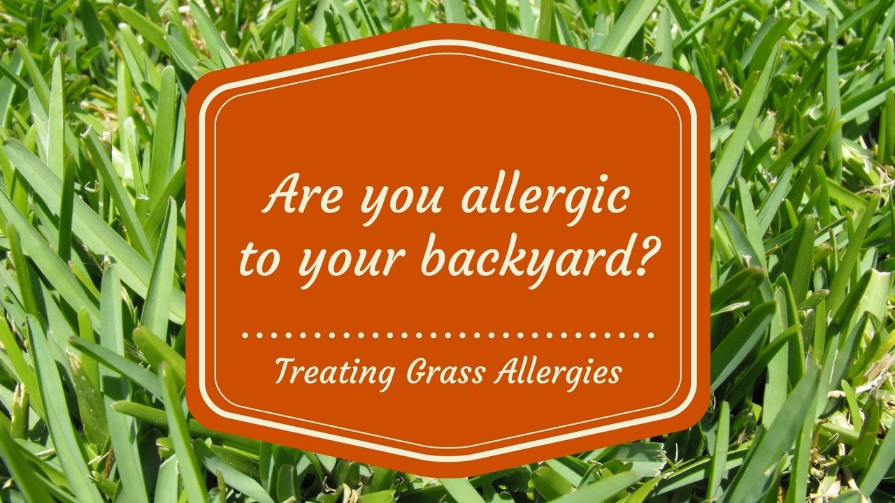 Are You Allergic To Your Backyard Bermuda Grass Allergy Http Myallergyfriend Com Bermuda Grass Allergy Symptoms Utm Grass Allergy Bermuda Grass Allergies