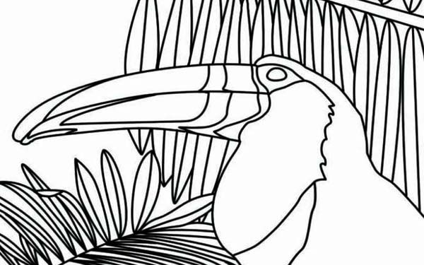 Toucan Toucan Between Palm Tree Coloring Page Tree Coloring