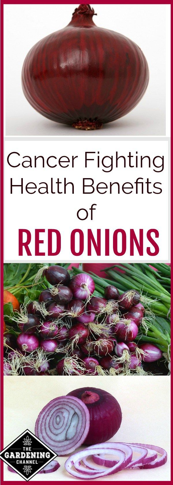 Cancer Fighting Health Benefits of Red Onions   Health
