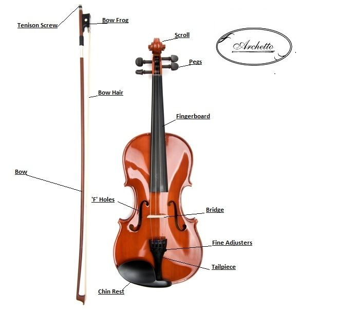 Basic parts of a violin and bow chart | Teaching Violin ...