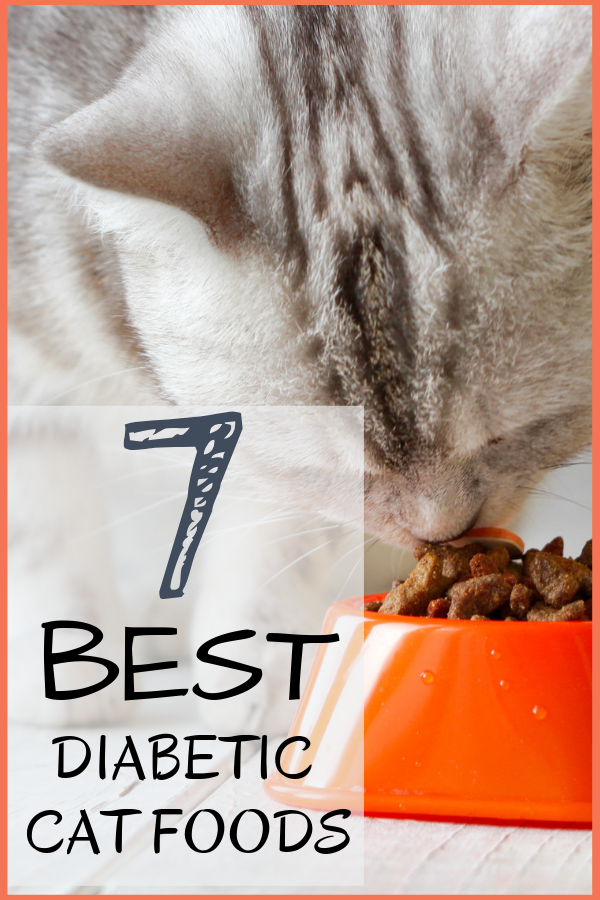 7 Best Diabetic Cat Foods Our 2020 Guide to Feeding a
