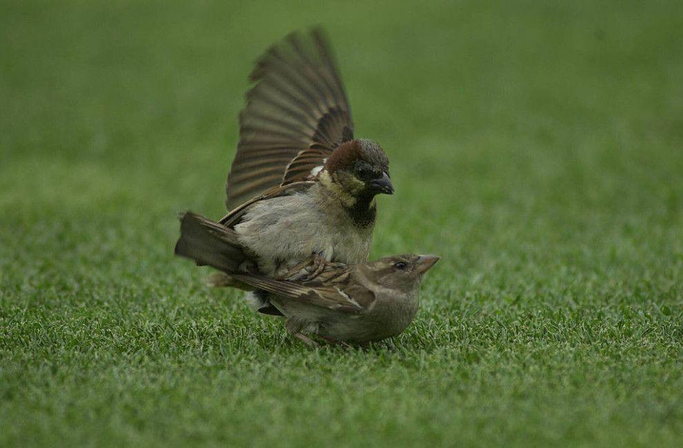 Les oiseaux mâles n'ont pas de pénis et les escargots aiment le sexe violent.