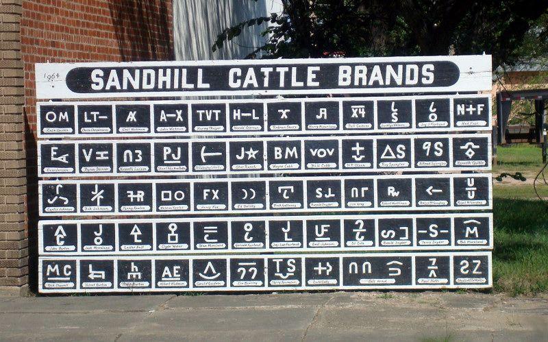 Ne sandhill culo de ganado