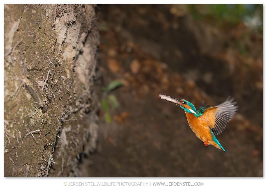 Special Kingfishers (met afbeeldingen)