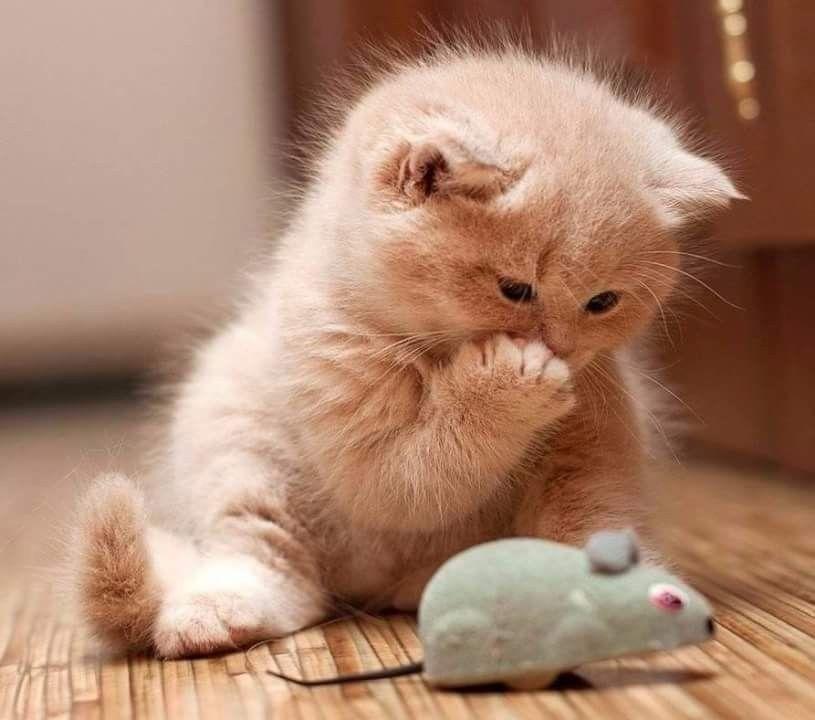 слова картинки с кошками и котятами прикольные стройная оса