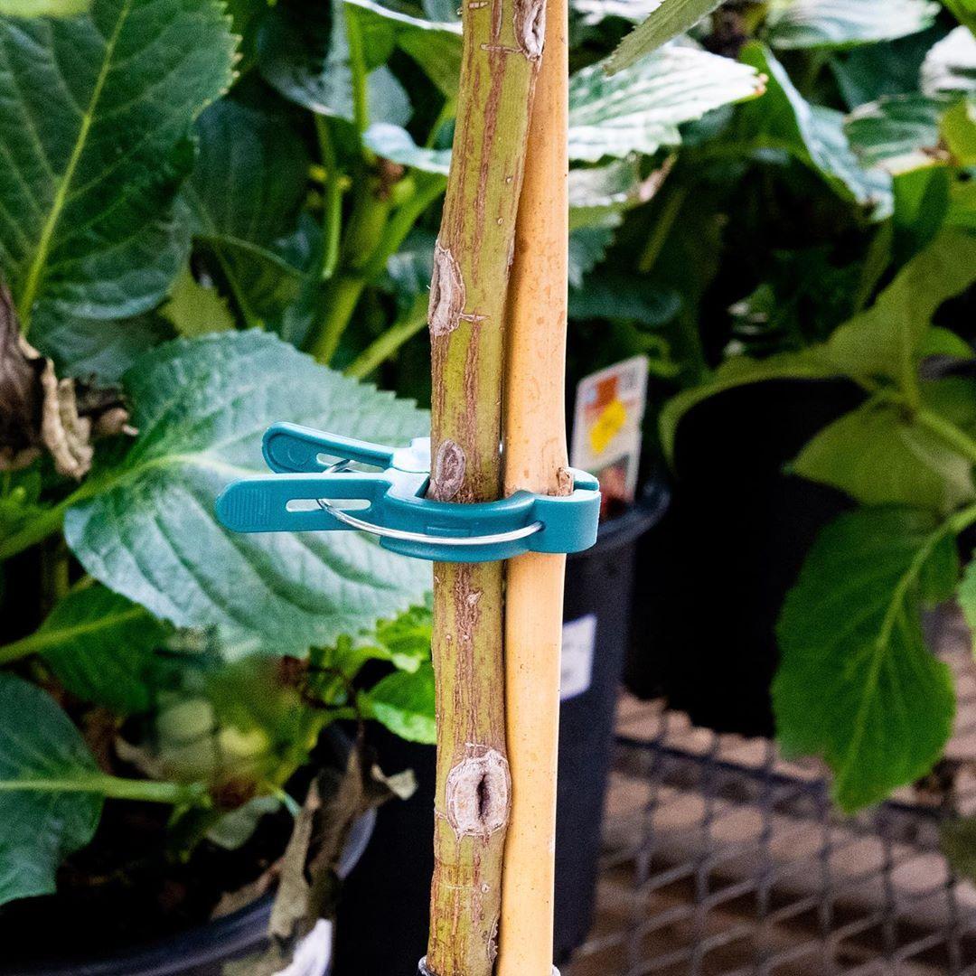 Garden Plant Clips