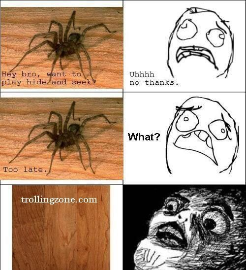 What Happens When You See Spider And Then Its Gone Dream Home