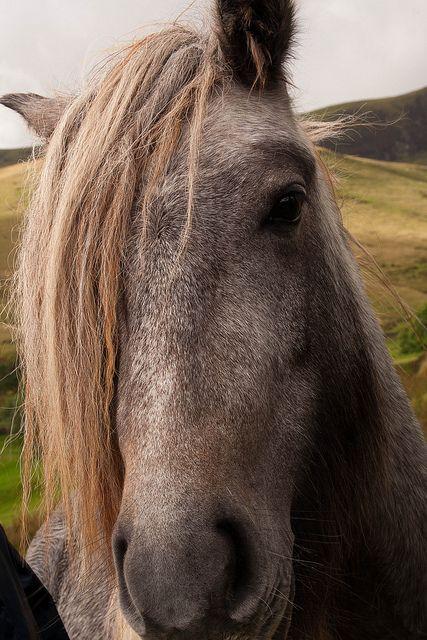 New Romantic Horse...... by MacBeales, via Flickr